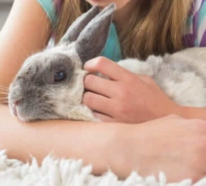 How to Build Trust with Your Pet Rabbit