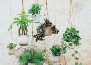 hangingplantsinfo h 860x614 1