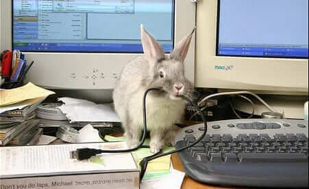 rabbitproofingyourhome e1484246513601