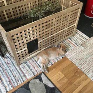 rabbit-place.com